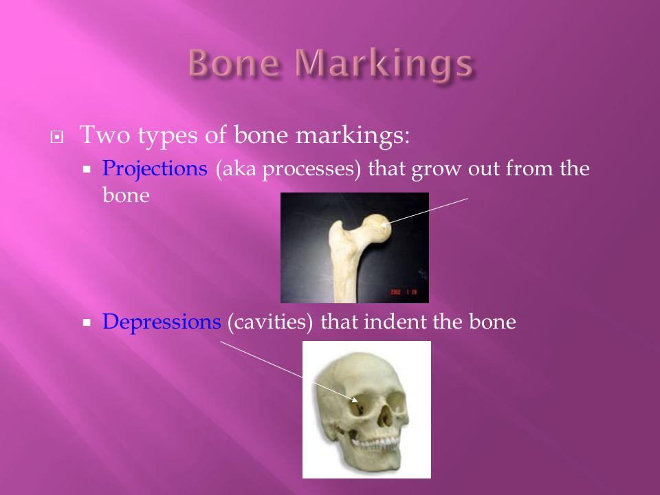 Bone Markings Two types of bone markings: