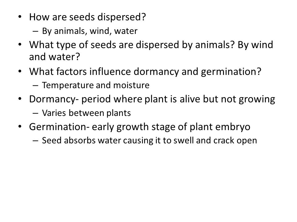 How are seeds dispersed