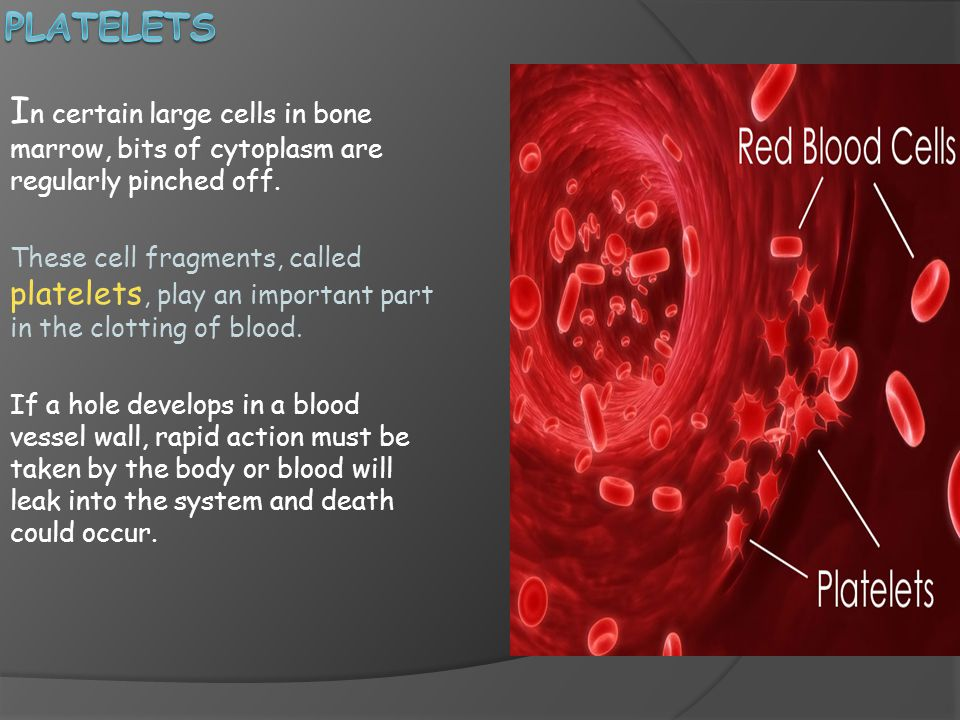 platelets In certain large cells in bone marrow, bits of cytoplasm are regularly pinched off.