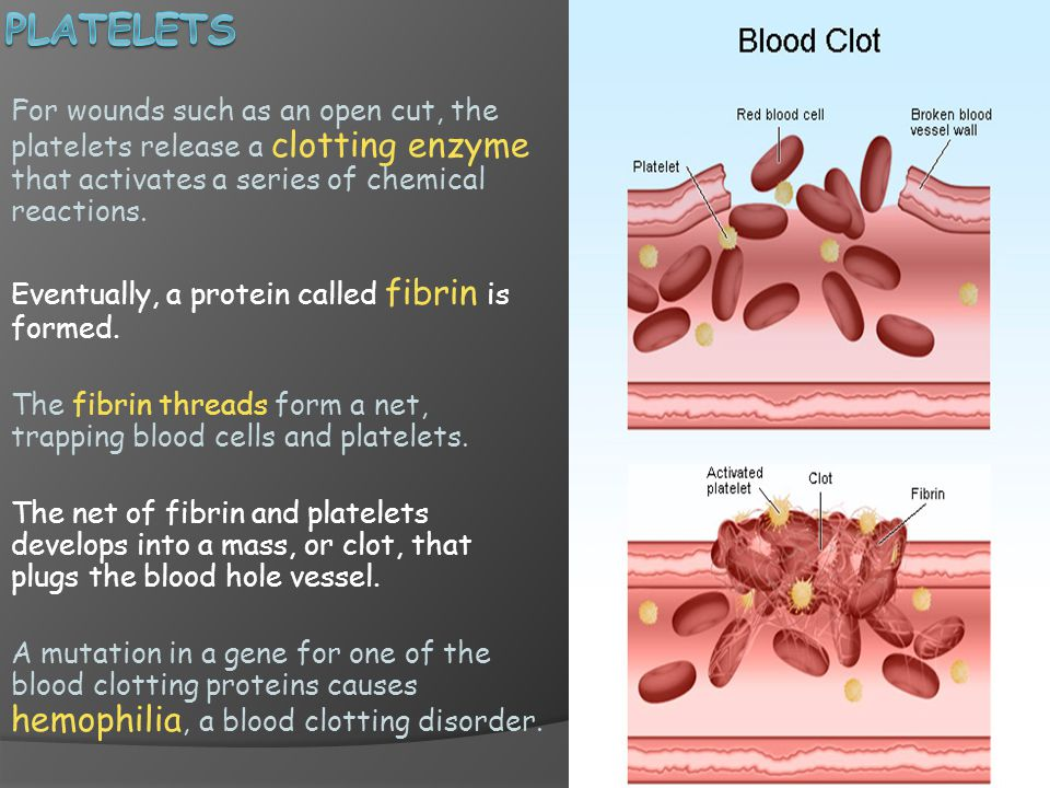 Platelets For wounds such as an open cut, the platelets release a clotting enzyme that activates a series of chemical reactions.