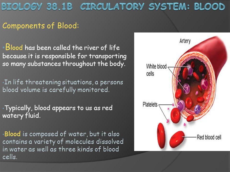 Biology 38.1B Circulatory System: Blood