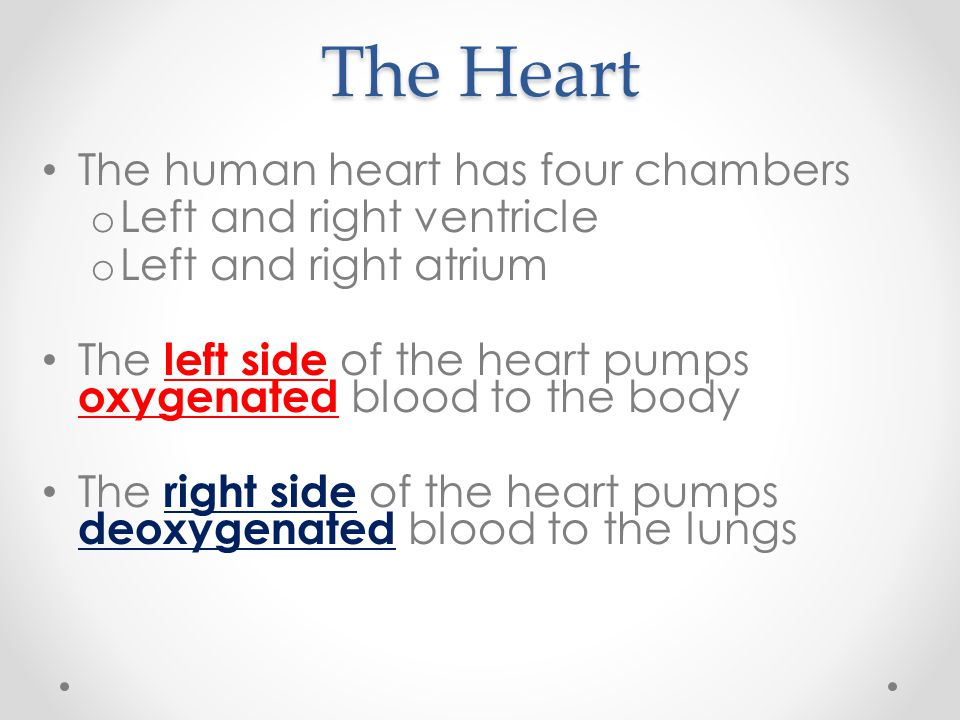The Heart The human heart has four chambers Left and right ventricle