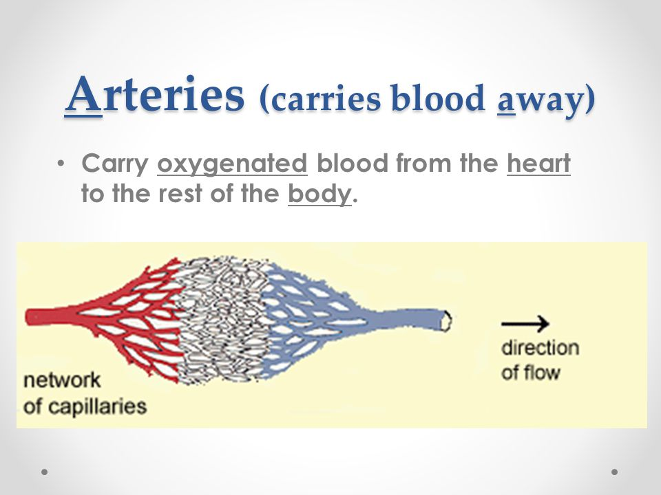 Arteries (carries blood away)