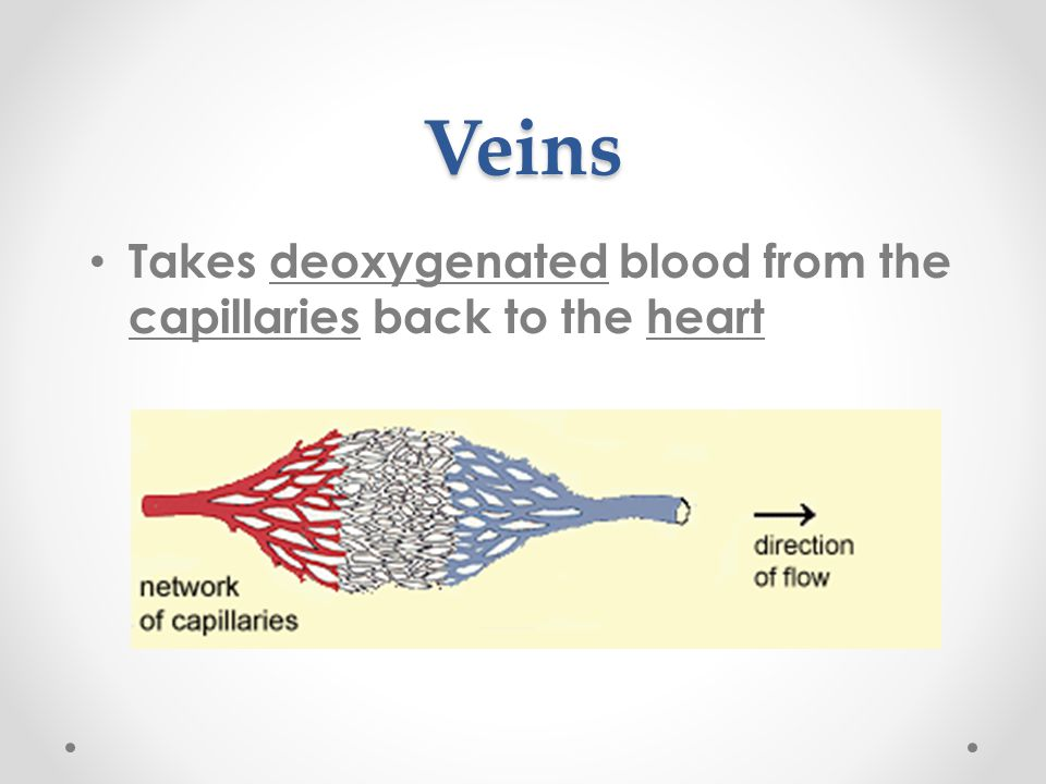 Veins Takes deoxygenated blood from the capillaries back to the heart