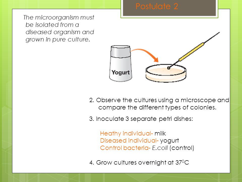 Postulate 2 The microorganism must be isolated from a diseased organism and grown in pure culture.