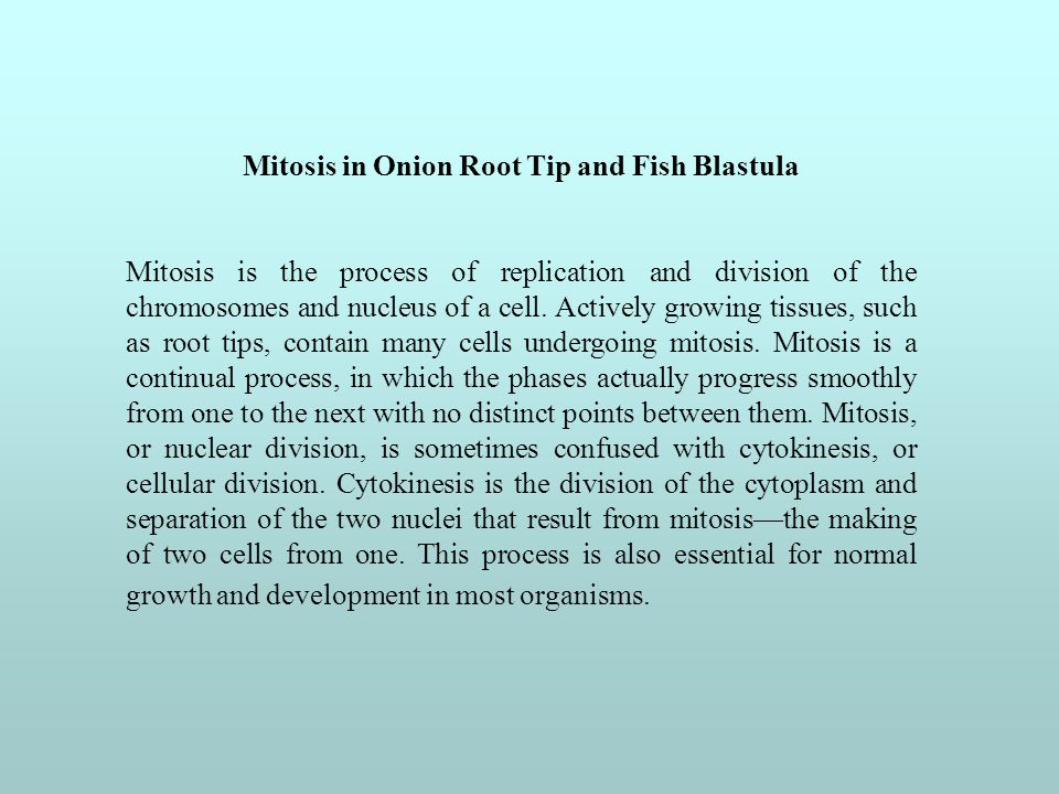Mitosis in Onion Root Tip and Fish Blastula