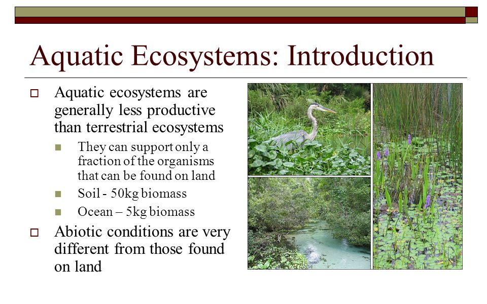 Aquatic Ecosystems: Introduction