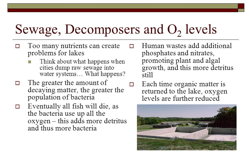 Sewage, Decomposers and O2 levels