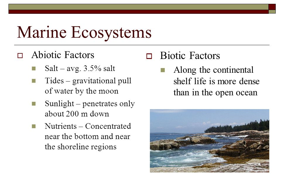 Marine Ecosystems Biotic Factors Abiotic Factors