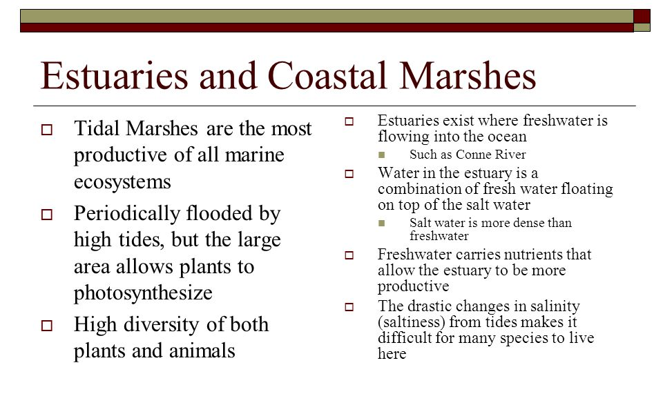 Estuaries and Coastal Marshes