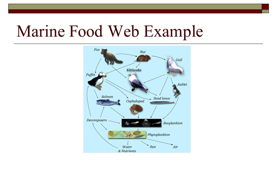 Marine Food Web Example