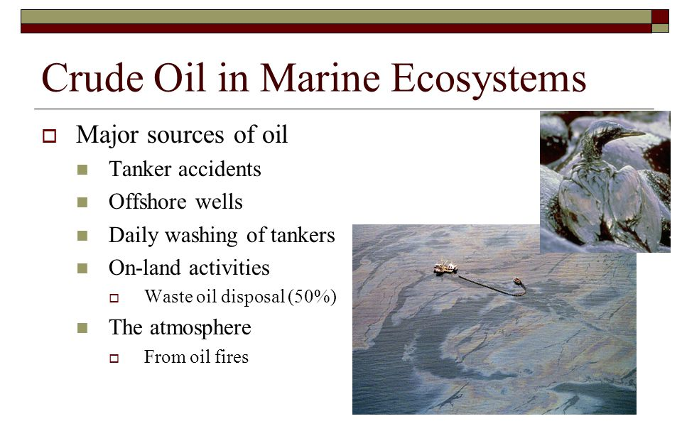 Crude Oil in Marine Ecosystems