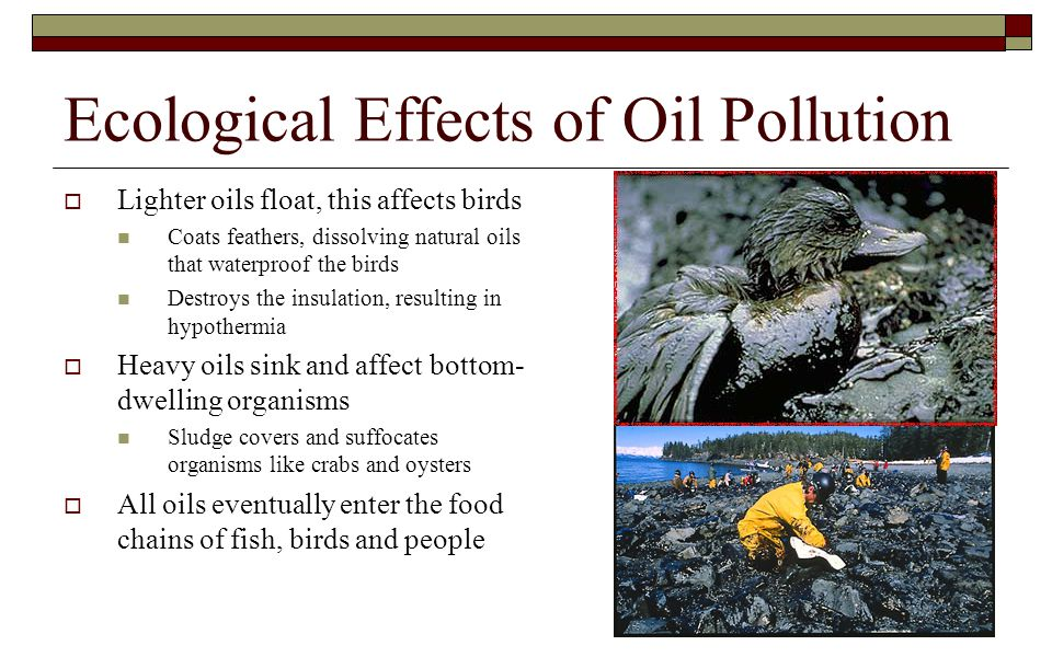 Ecological Effects of Oil Pollution