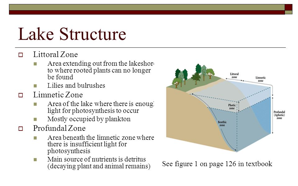 Lake Structure Littoral Zone Limnetic Zone Profundal Zone