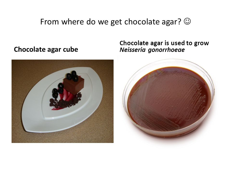 From where do we get chocolate agar 