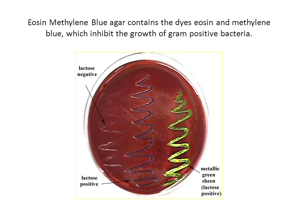 Eosin Methylene Blue agar contains the dyes eosin and methylene blue, which inhibit the growth of gram positive bacteria.