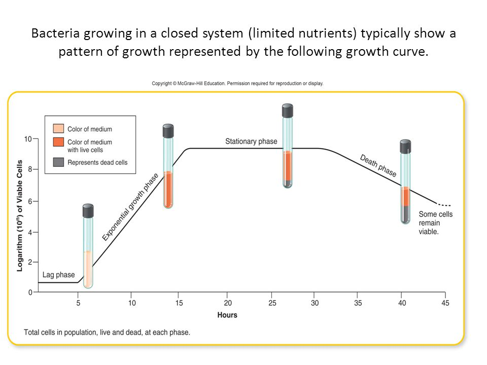 Bacteria growing in a closed system (limited nutrients) typically show a pattern of growth represented by the following growth curve.