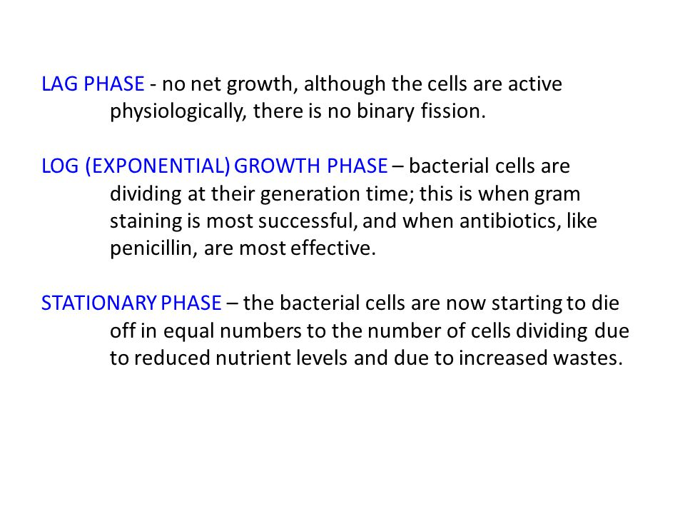LAG PHASE - no net growth, although the cells are active