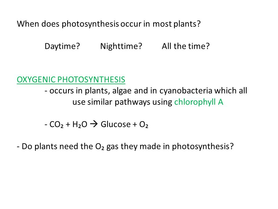 When does photosynthesis occur in most plants. Daytime. Nighttime