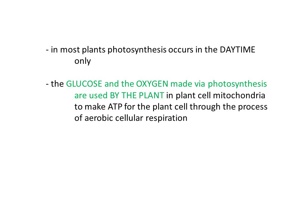 - in most plants photosynthesis occurs in the DAYTIME. only
