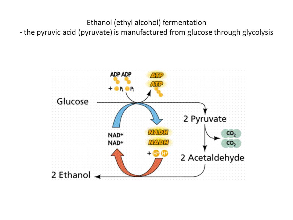 Ethanol (ethyl alcohol) fermentation - the pyruvic acid (pyruvate) is manufactured from glucose through glycolysis