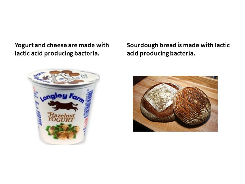 Yogurt and cheese are made with lactic acid producing bacteria.
