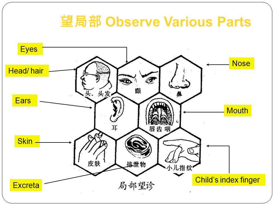 望局部 Observe Various Parts