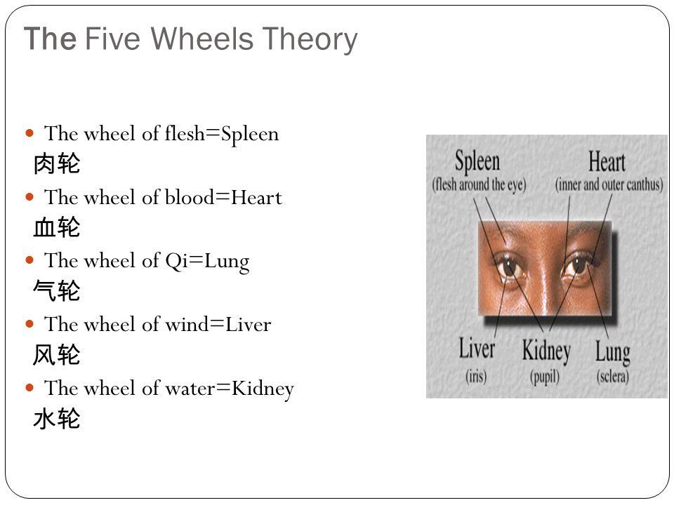 The Five Wheels Theory The wheel of flesh=Spleen 肉轮