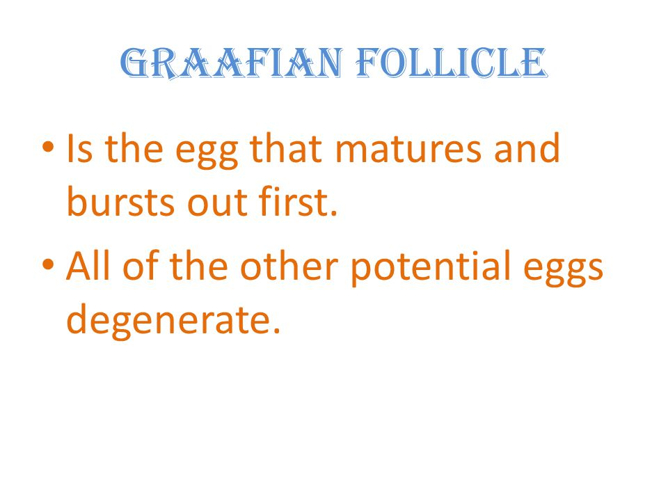 Graafian Follicle Is the egg that matures and bursts out first.