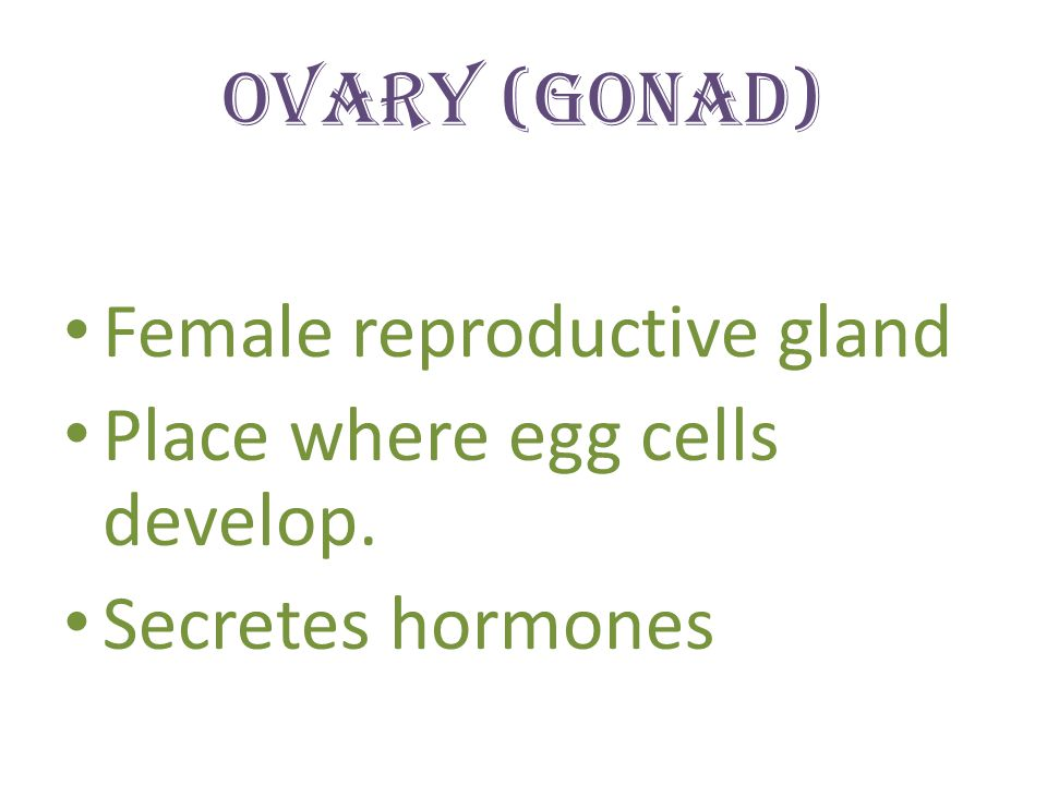 Ovary (Gonad) Female reproductive gland Place where egg cells develop. Secretes hormones
