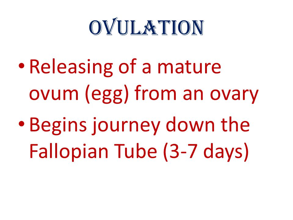Ovulation Releasing of a mature ovum (egg) from an ovary.