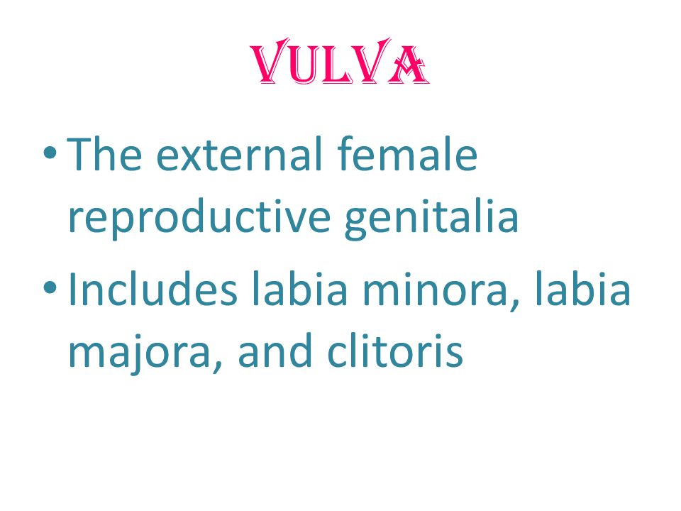 Vulva The external female reproductive genitalia