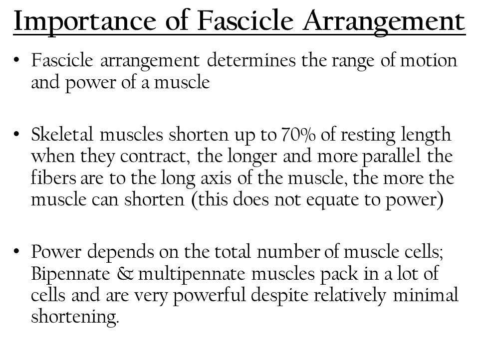 Importance of Fascicle Arrangement
