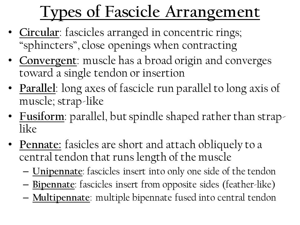 Types of Fascicle Arrangement