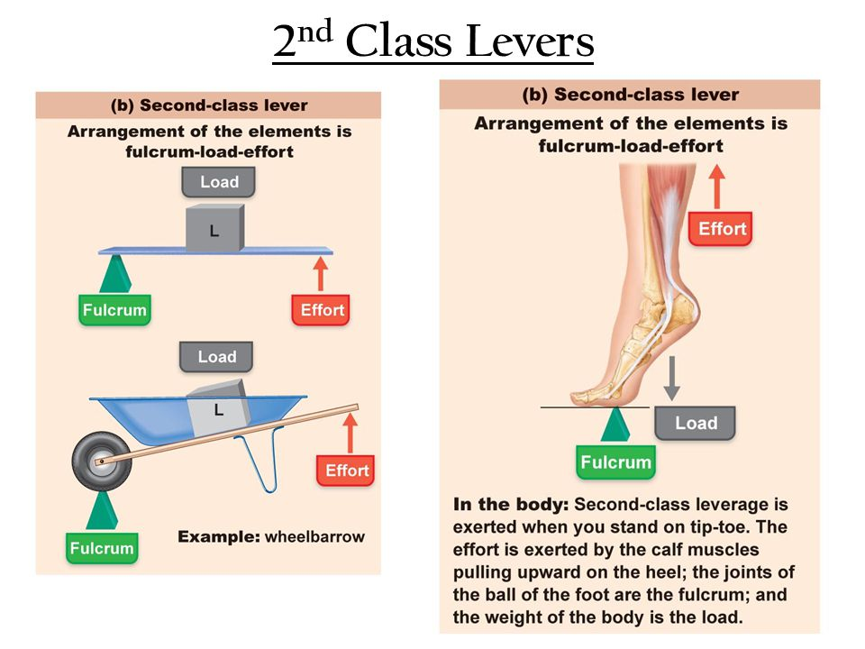 2nd Class Levers