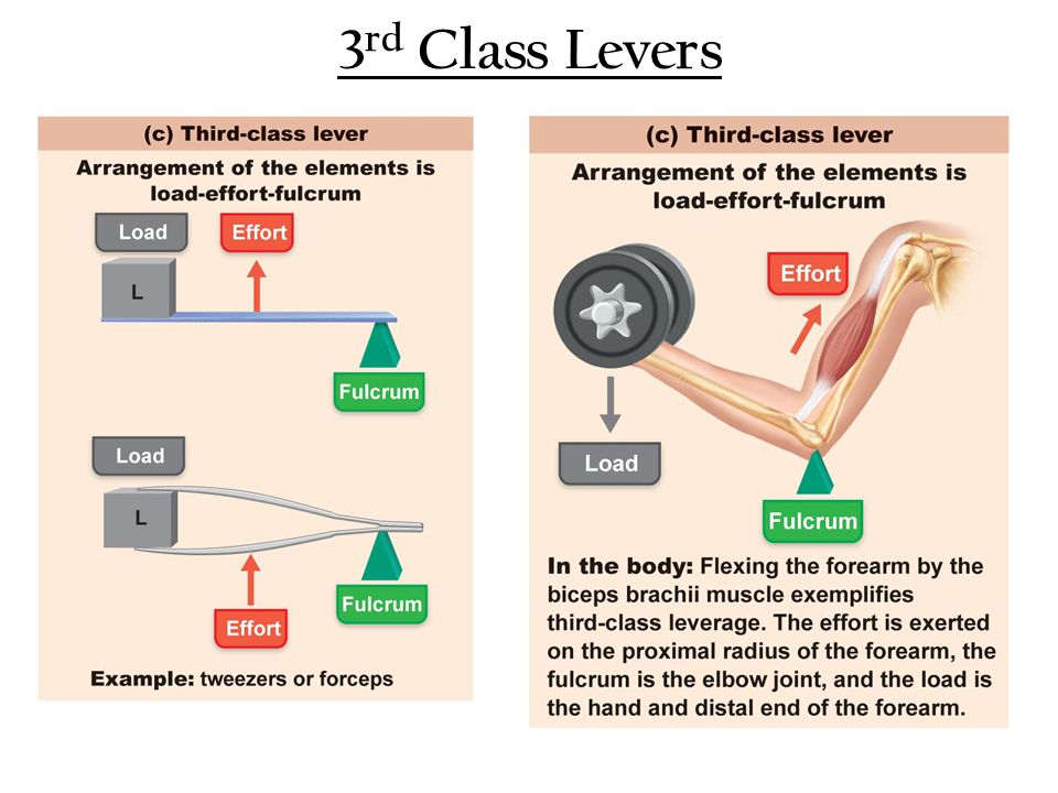 3rd Class Levers