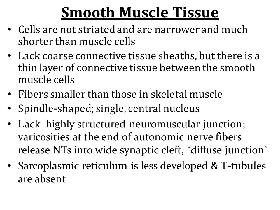 Smooth Muscle Tissue Cells are not striated and are narrower and much shorter than muscle cells.