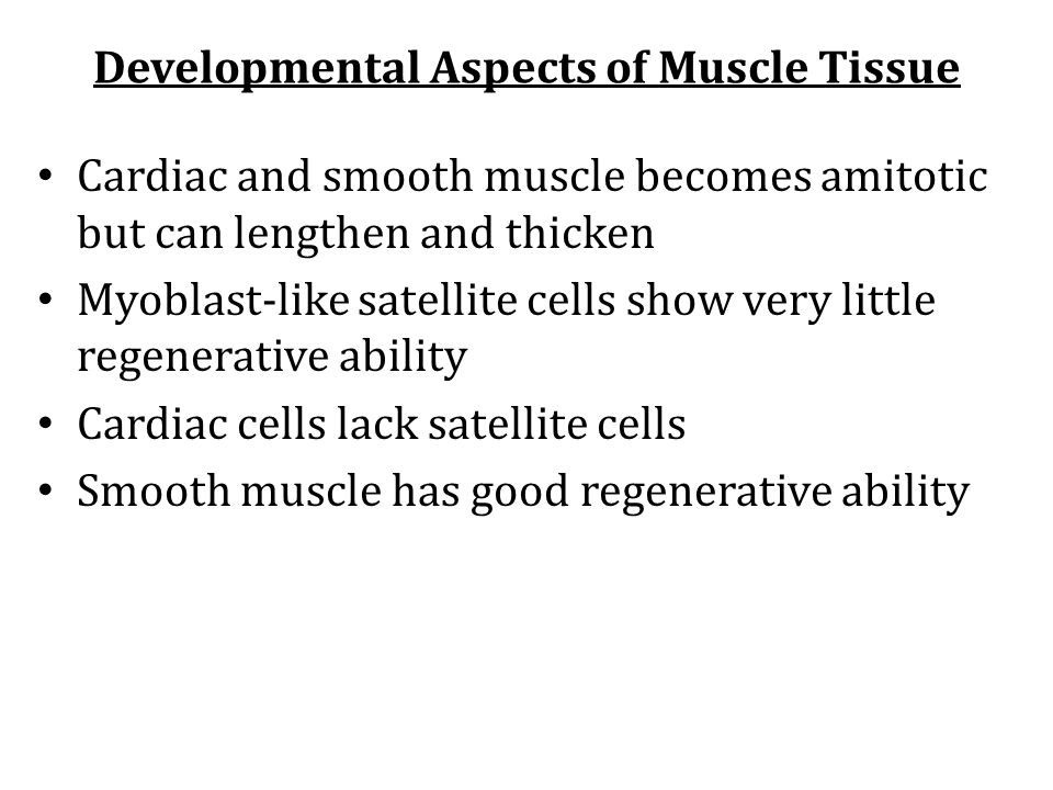 Developmental Aspects of Muscle Tissue