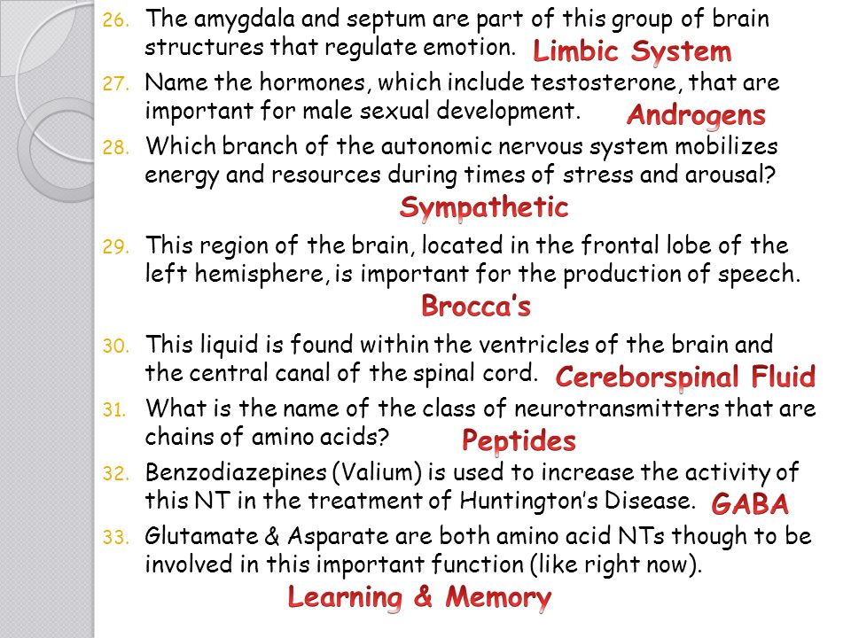 Limbic System Androgens Sympathetic Brocca's Cereborspinal Fluid