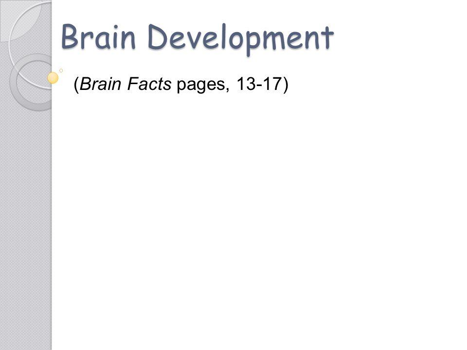 Brain Development (Brain Facts pages, 13-17)