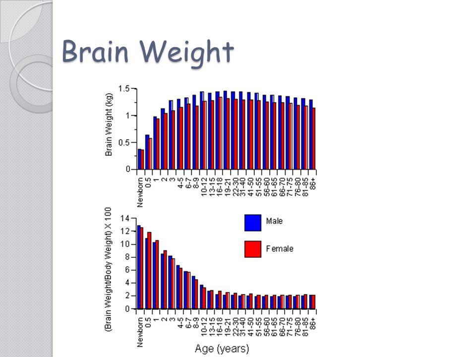 Brain Weight