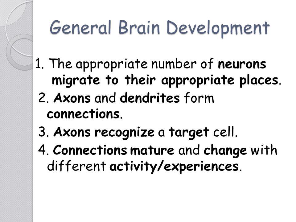General Brain Development