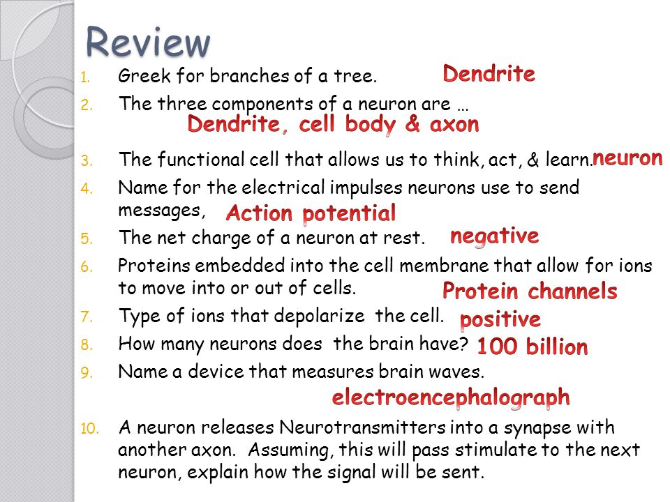 Dendrite, cell body & axon electroencephalograph