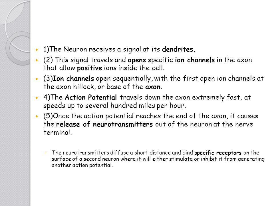 1)The Neuron receives a signal at its dendrites.