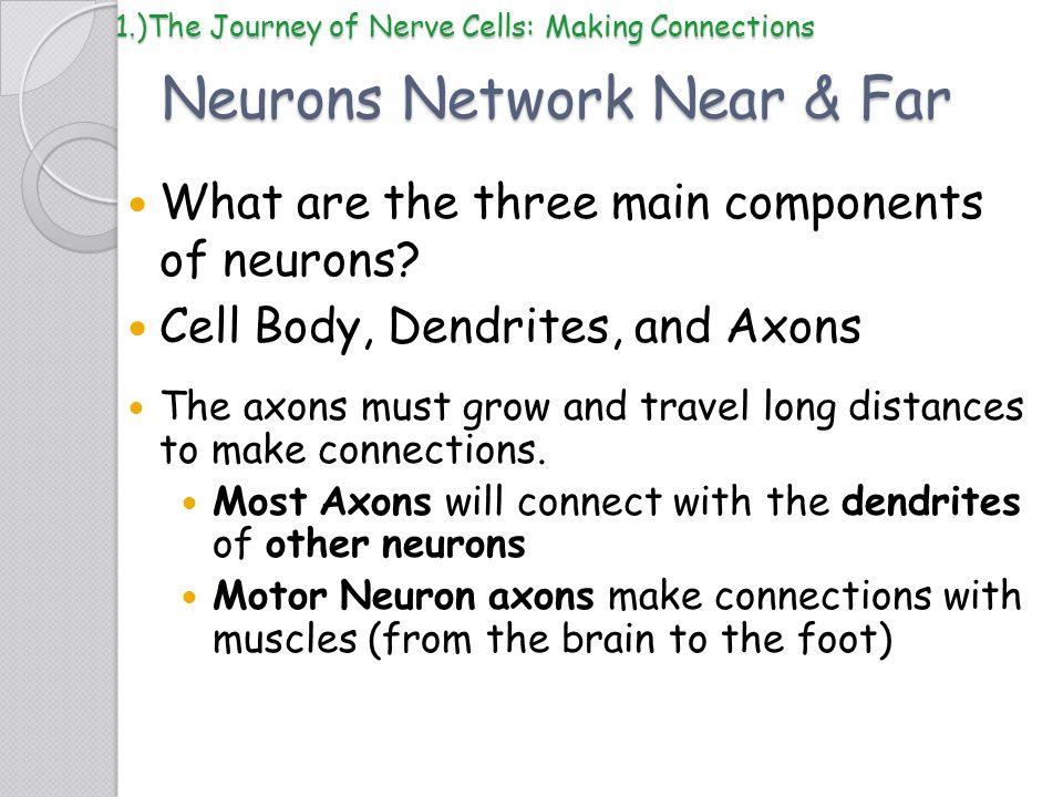 Neurons Network Near & Far