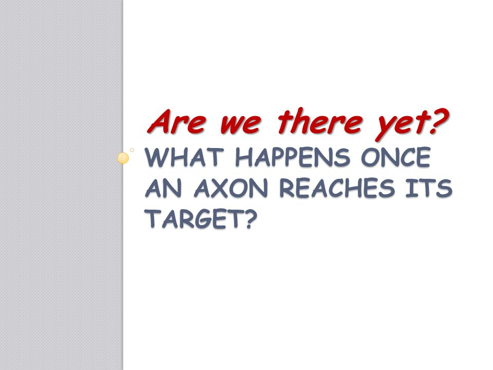 What happens once an axon reaches its target