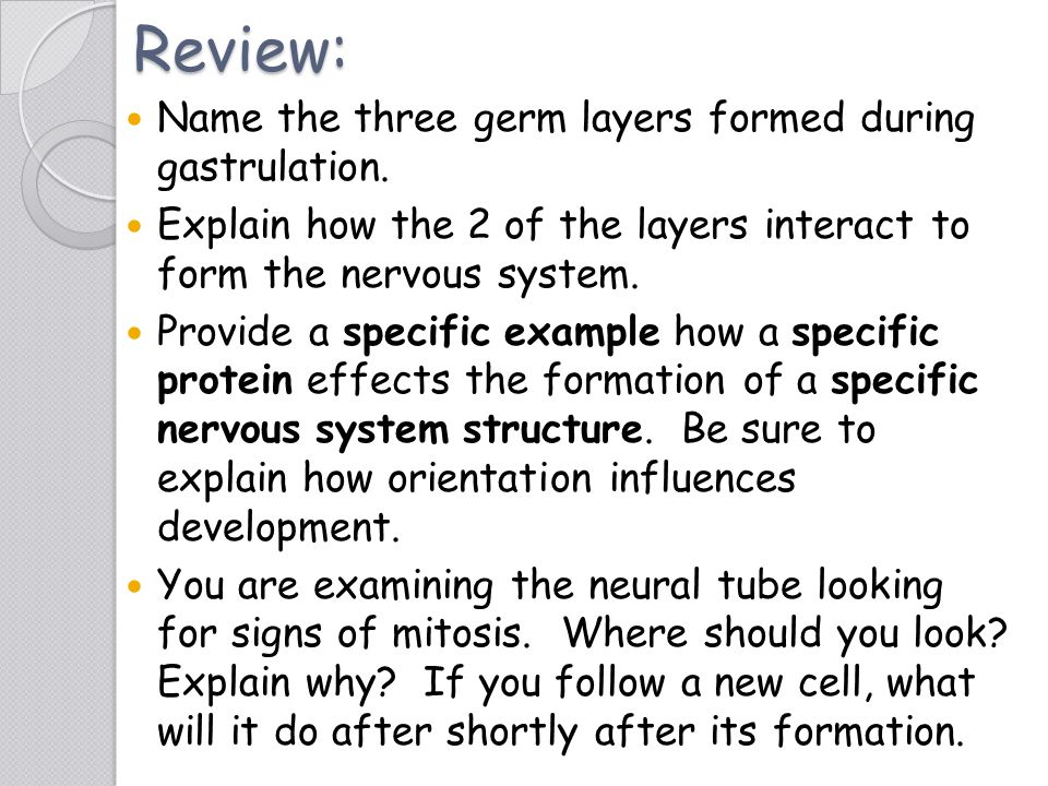 Review: Name the three germ layers formed during gastrulation.