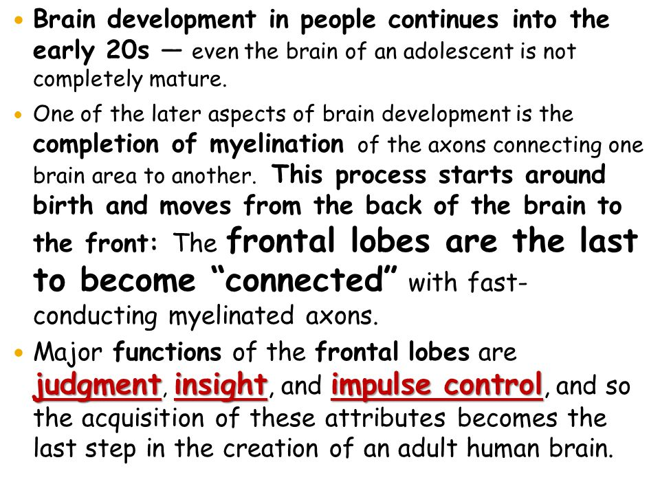 Brain development in people continues into the early 20s — even the brain of an adolescent is not completely mature.