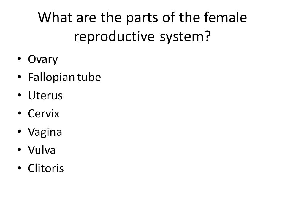 What are the parts of the female reproductive system