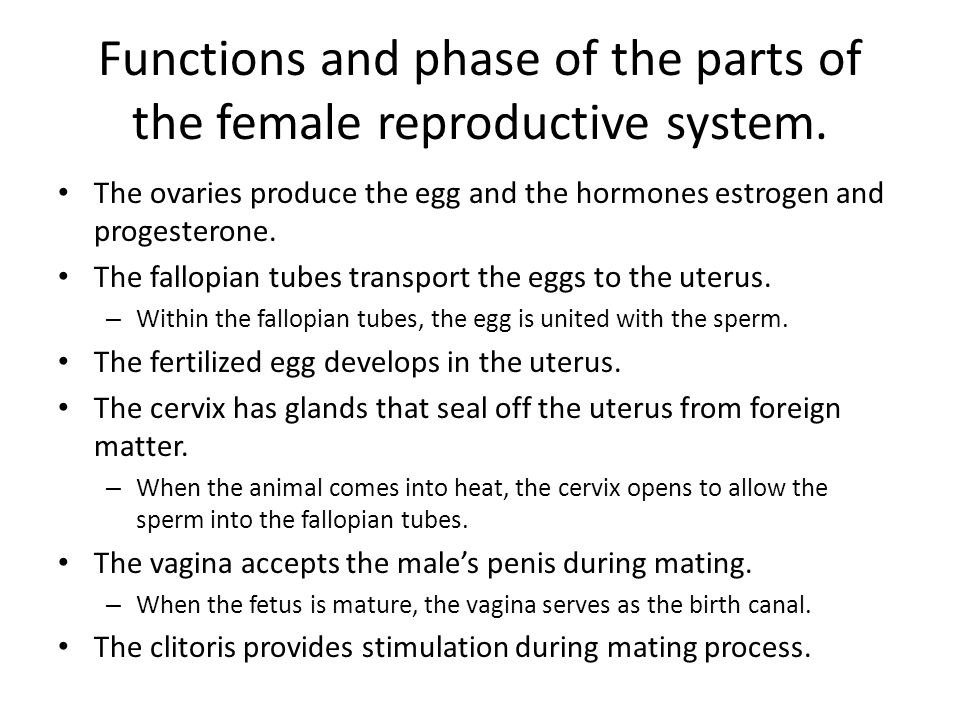 Functions and phase of the parts of the female reproductive system.